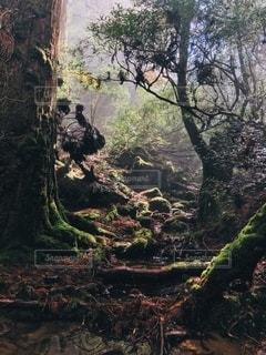 自然の写真・画像素材[2672390]