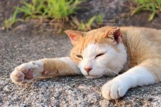 猫の写真・画像素材[2672520]