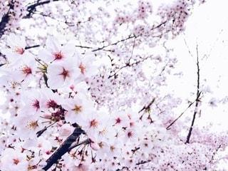 花の写真・画像素材[2672523]