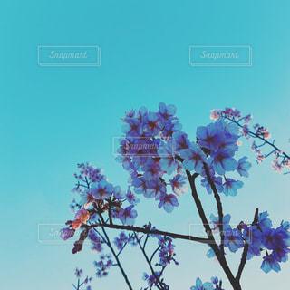 木に花の花瓶の写真・画像素材[3057910]