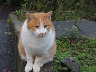 土の上に座っている猫の写真・画像素材[3673140]