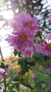 花をクローズアップするの写真・画像素材[2711270]