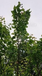 木のクローズアップの写真・画像素材[3293540]