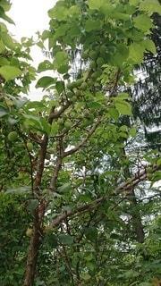 木のクローズアップの写真・画像素材[3293541]