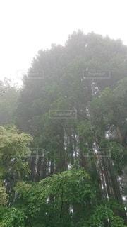 森の中の木の写真・画像素材[3317582]