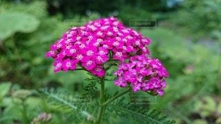 花のクローズアップの写真・画像素材[3365962]