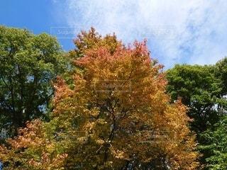 秋だねの写真・画像素材[3792401]