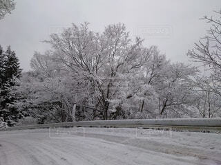 地面に雪が降った木の写真・画像素材[4058393]