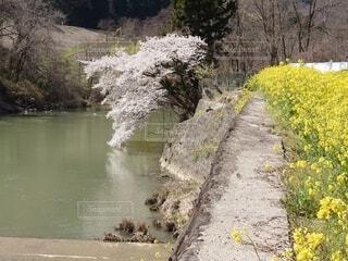 川の側に木がある道の写真・画像素材[4322690]