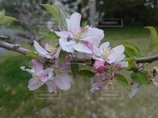 花のクローズアップの写真・画像素材[4376206]