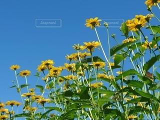 夏空の写真・画像素材[4649639]