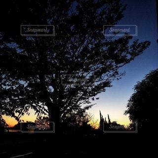 夕日が背景にある木の写真・画像素材[2719570]