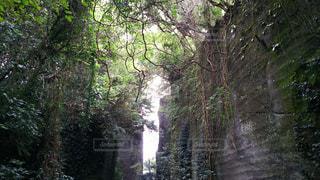 神秘的な森の写真・画像素材[2687957]