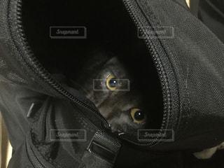 猫の写真・画像素材[258726]