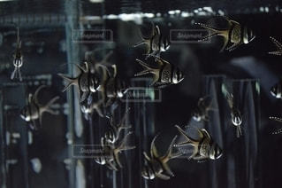 魚の写真・画像素材[2780751]