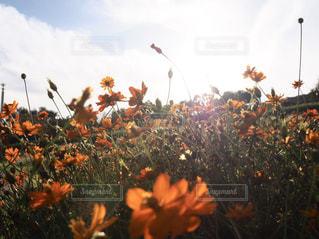 花畑2の写真・画像素材[2805256]