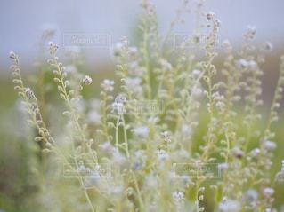 お花畑の写真・画像素材[2805264]