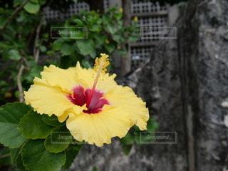 空を仰ぐ花の写真・画像素材[2685004]
