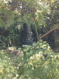 木漏れ日と滝の写真・画像素材[2678546]