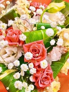 花をクローズアップするの写真・画像素材[2736435]