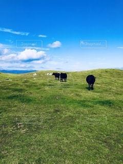 標高1400メートルの牧場の写真・画像素材[2740638]