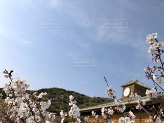 学び舎と桜の写真・画像素材[3095831]