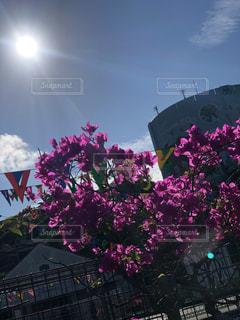 綺麗な花の写真・画像素材[2678799]