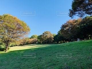 公園の芝生広場の写真・画像素材[2682248]