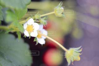 花をクローズアップするの写真・画像素材[2680836]