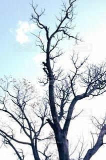 秋冬を感じる木のシルエットの写真・画像素材[2729431]
