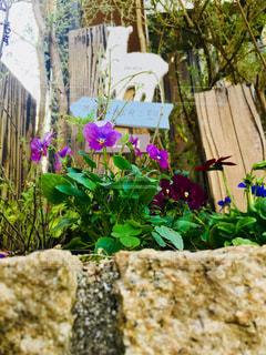 花壇のクローズアップの写真・画像素材[2700600]