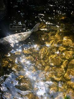 鯉と光の反射の写真・画像素材[3134233]