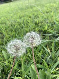 緑の植物のクローズアップの写真・画像素材[3680093]