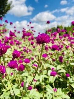 紫色の花のクローズアップの写真・画像素材[3680289]