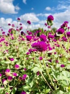 紫色の花のクローズアップの写真・画像素材[3680288]