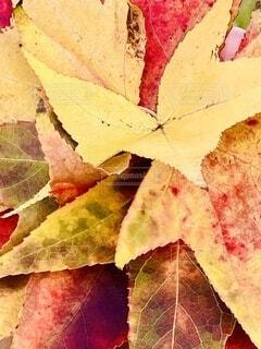 落ち葉のブーケの写真・画像素材[3816667]