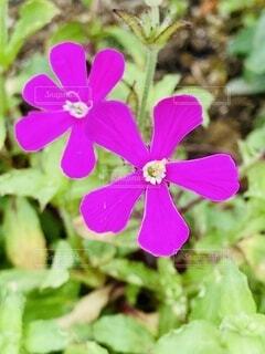 花のクローズアップの写真・画像素材[4125561]