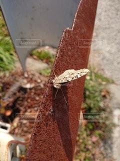 暖を取る蝶々の写真・画像素材[2805460]