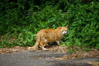 のら猫の写真・画像素材[3380864]