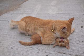しつけ猫の写真・画像素材[2695821]