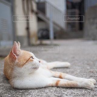 地面に横たわっているオレンジと白の猫の写真・画像素材[2695823]