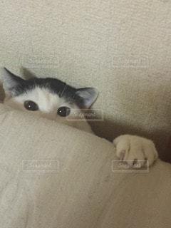 猫の写真・画像素材[14864]