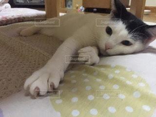 猫 - No.45478