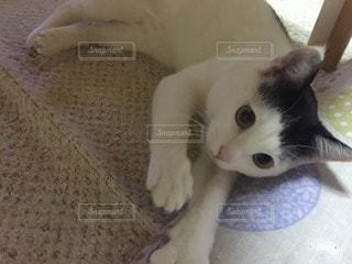 猫 - No.45481