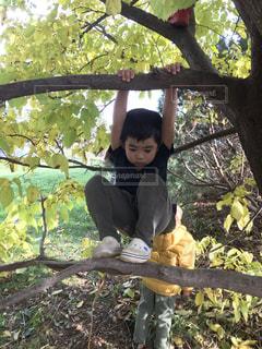 木登りする少年の写真・画像素材[2685220]