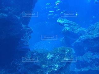 水中の写真・画像素材[2686310]