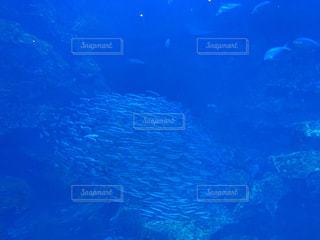 水中の魚の群の写真・画像素材[2686311]