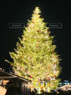 夜空に映えるイルミクリスマスツリーの写真・画像素材[2792355]