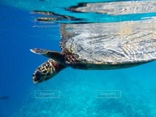 幸せを呼ぶ海亀の写真・画像素材[2690542]