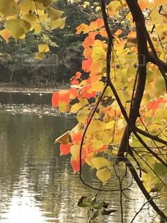水面と紅葉の写真・画像素材[2688081]